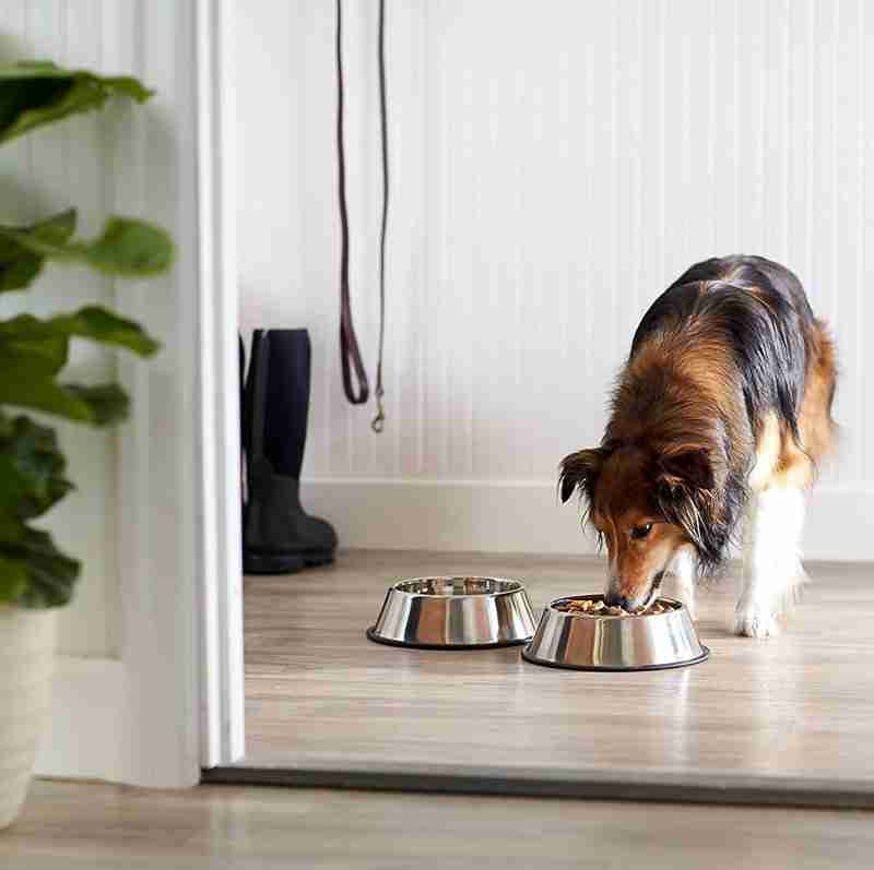 What is a dog bowl? water bowl, food bowl.